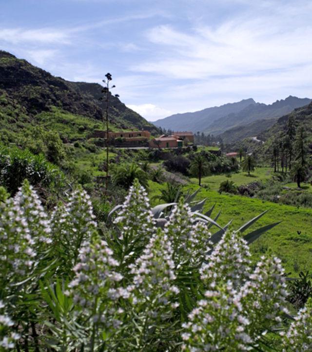 Valle de Mogán