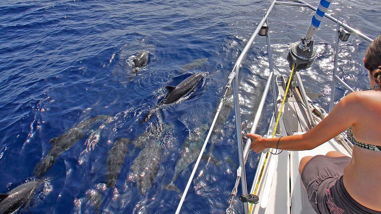 Delfines en la costa sur de Gran Canaria