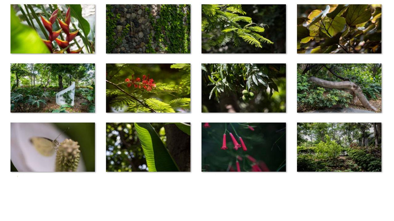 Huerto de las Flores en Agaete