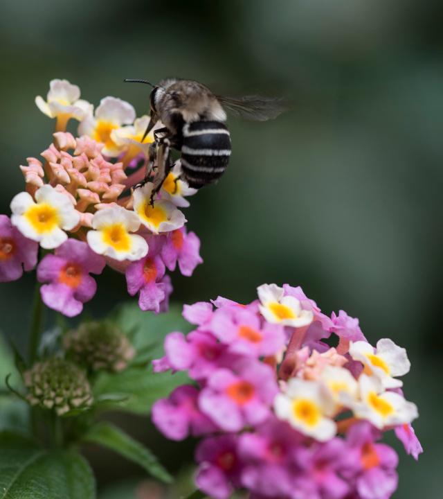 Huerto de las Flores de Agaete