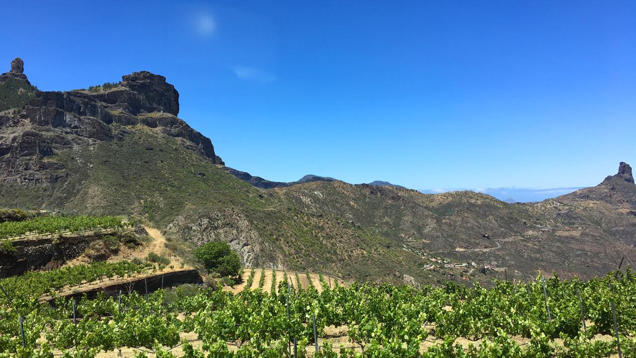 Viñedo en Gran Canaria con Roque Nublo y Roque Bentayga al fondo