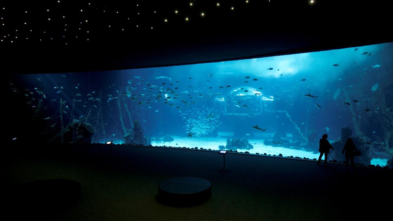 Interior del Acuario Poema del Mar