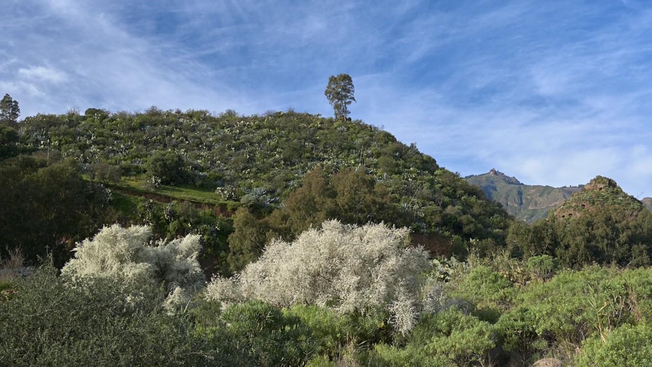 San Miguel Ravine