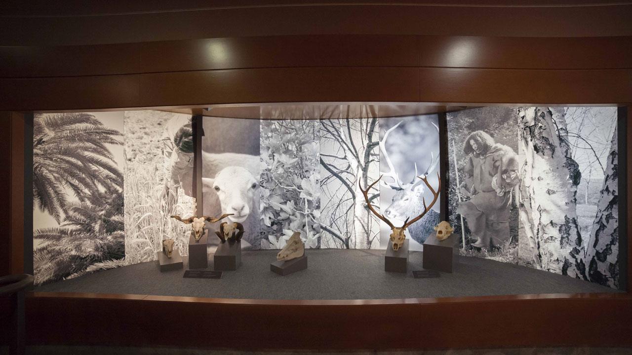 Exposición 'El largo viaje… De Altamira a la Cueva Pintada'