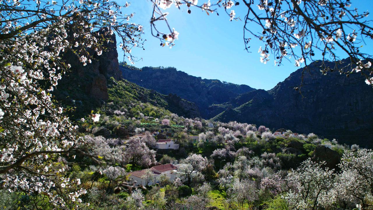 Paisaje de Almendros en flor en Ayacata, Gran Canaria