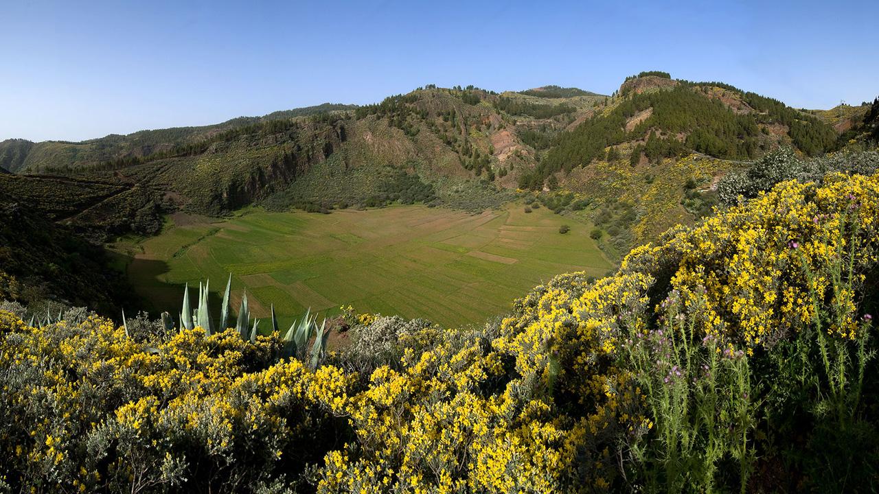 Vegetación en la Caldera de los Marteles en Gran Canaria