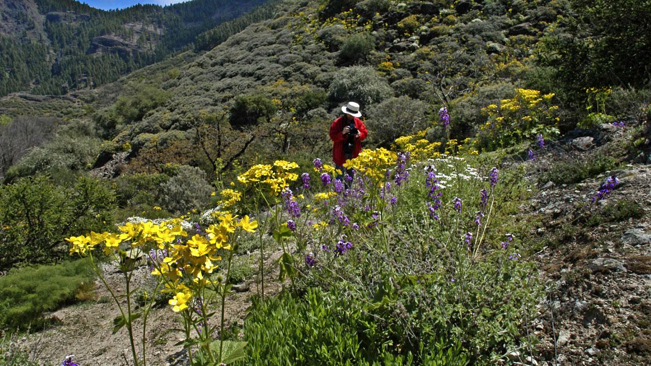 Una persona realiza fotos de flores en Hoya del Gamonal, Gran Canaria