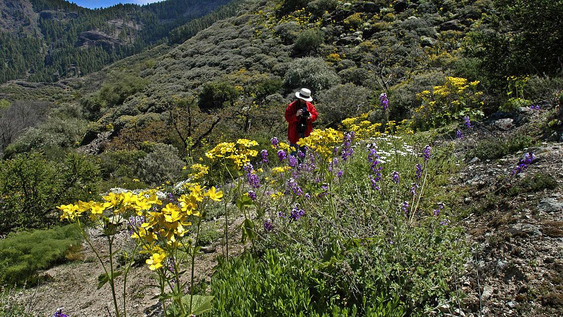 Una persona realiza fotos a las flores en Hoya del Gamonal, en Gran Canaria
