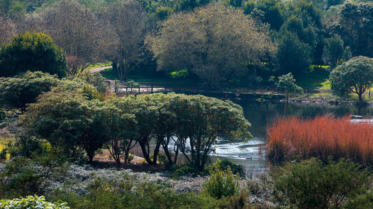 Paisaje de la Laguna de Valleseco en la isla de Gran Canaria