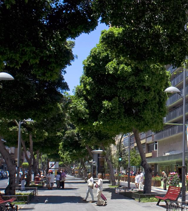 Mesa y López Allee. Las Palmas de Gran Canaria, Gran Canaria