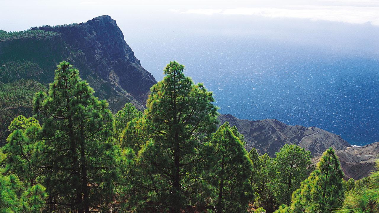 Pinar de Tamadaba en Gran Canaria