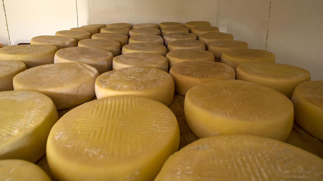 Käse aus Santa María de Guía. Gran Canaria