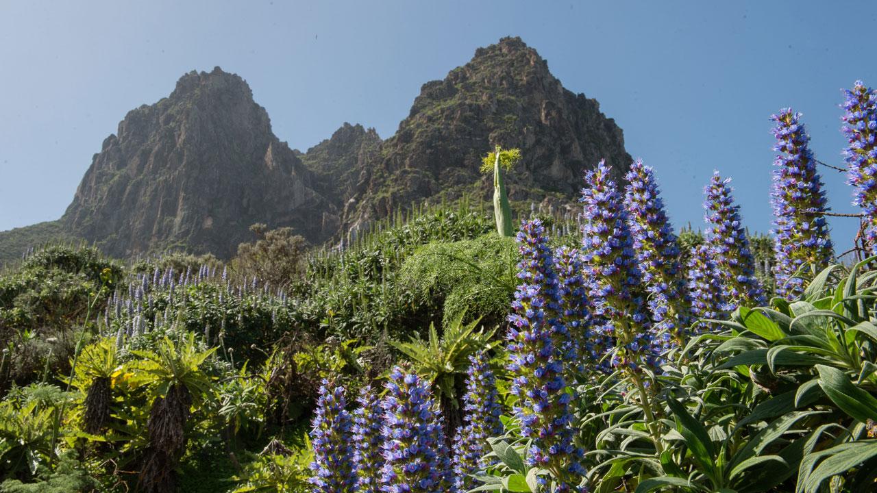 Tenteniguada, Valsequillo de Gran Canaria