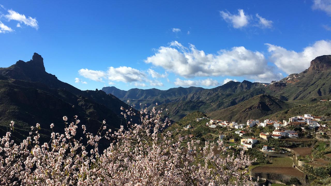 Almendro en Flor en el pueblo de Tejeda, Gran Canaria