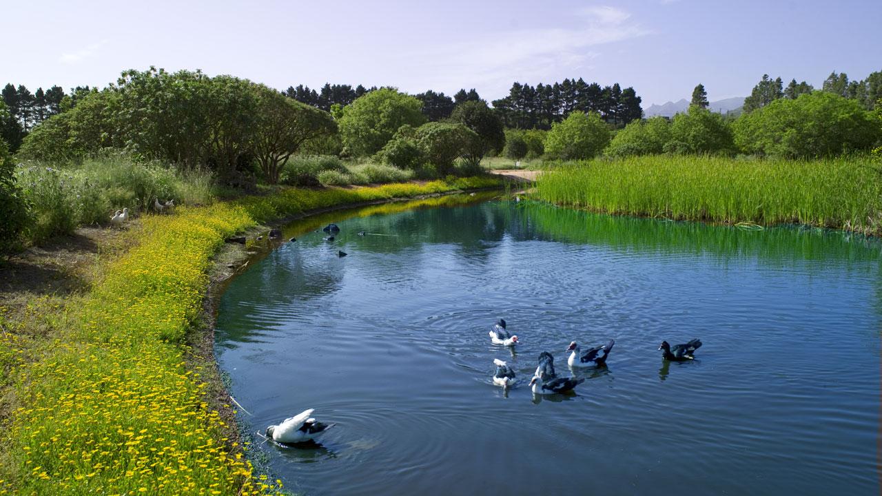 Laguna de Valleseco