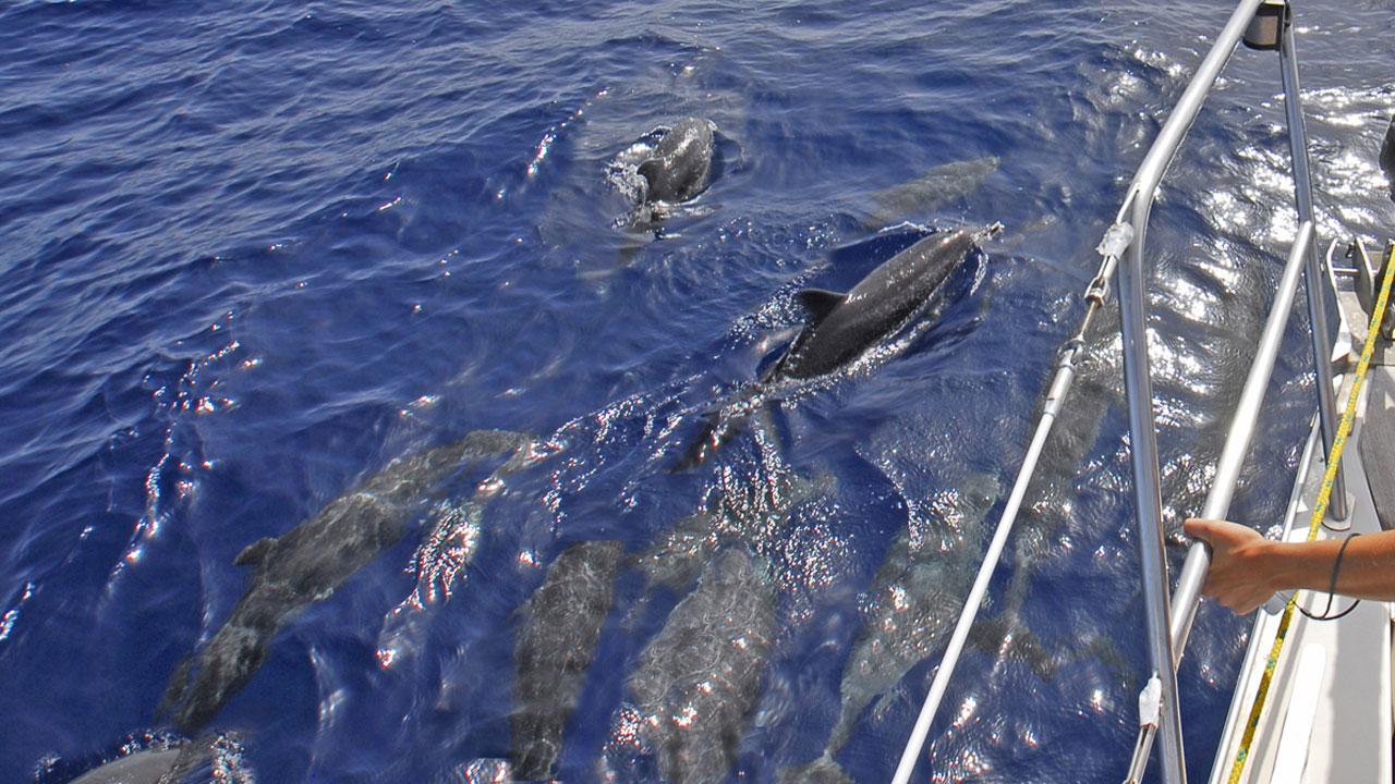 Observación de cetáceos desde un barco en alta mar