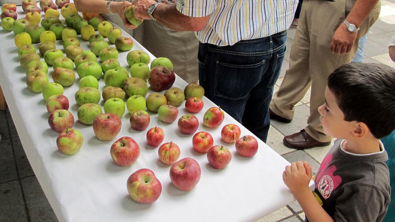 Exposición de manzanas en Valleseco