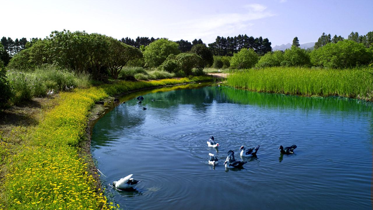 La Laguna de Valleseco