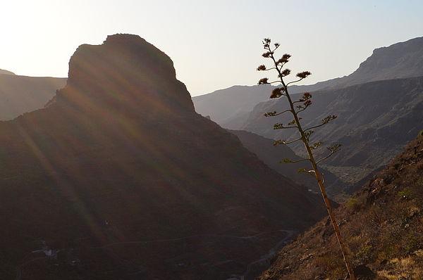 Paisaje del interior de Gran Canaria