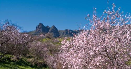 Ruta del Almendrero en Flor - Valsequillo
