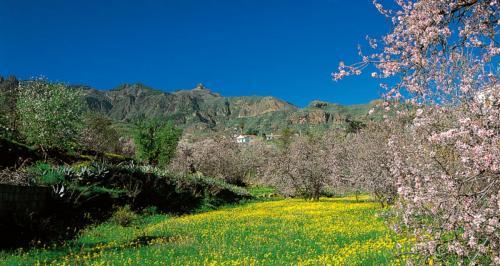 Almendrero en Flor 2021 - Valsequillo de Gran Canaria