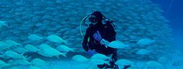 Buceador rodeado de un fondo azul