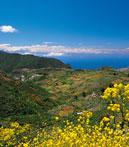 Descubre Valsequillo de Gran Canaria