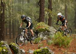 Två killar cyklar i Gran Canarias skogar