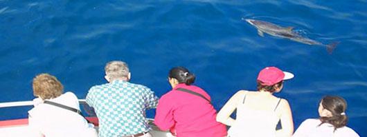Un gruppo di persone avvista i delfini da una barca