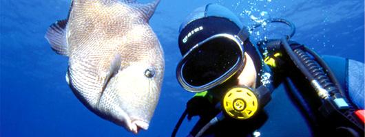 Un sub osserva un pesce