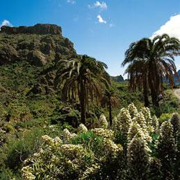 Güi Güi Natural Reserve