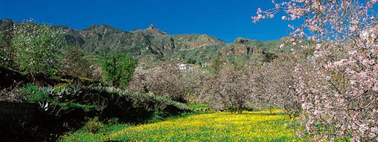 Mandorli fioriti a Valsequillo