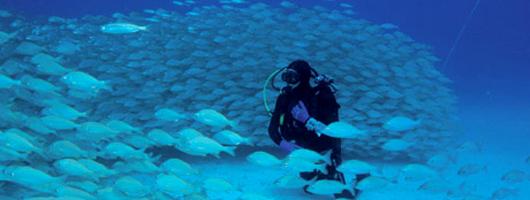Un buceador olvida las prisas en el fondo de Sardina