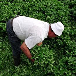 A farmer working in Firgas