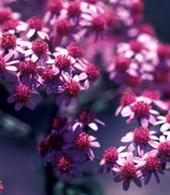 Växter med blommor