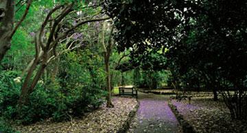 Viera y Clavijo botanical gardens