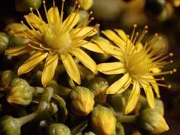 Fiore nel Giardino Botanico Viera y Clavijo