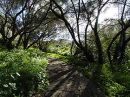 Path in the Botanical Garden Viera y Clavijo