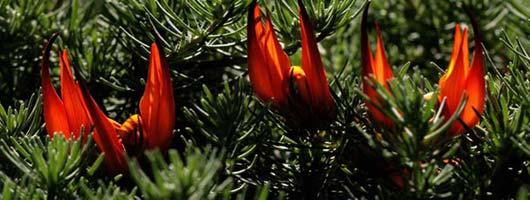 Red flower in the Botanical Garden Viera y Clavijo