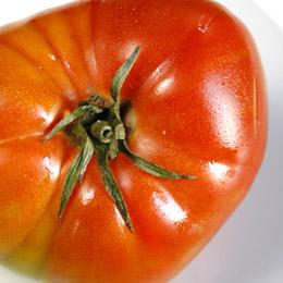 En mogen röd tomat