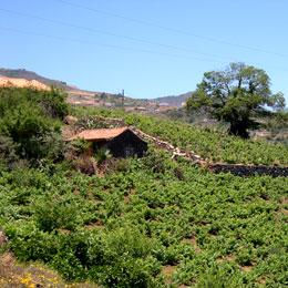 Landschaft bei San Mateo