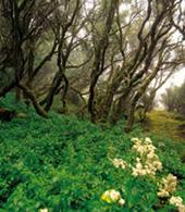 Moya linden forest
