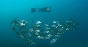 Gran Canaria: Eine verborgene Welt (nur für Taucher)